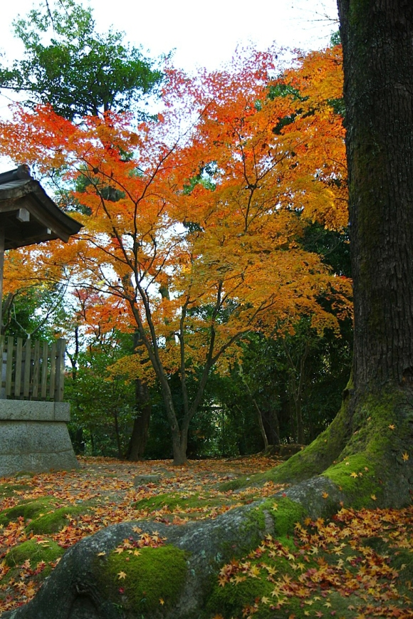 Kinkakuji Garden