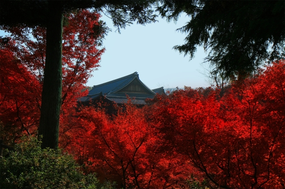 Tofukuji In Red